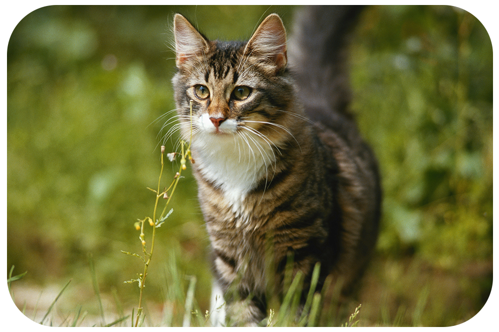 ALL CATS spot