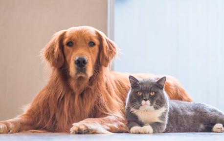 Hund og kat slider