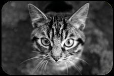 TASTY Cat spot