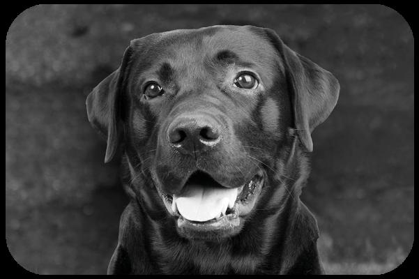 TASTY Dog spot